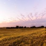 Why You Should Find Land For Sale At Online Auctions